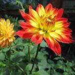 Blumenschmuckwettbewerb 2019
